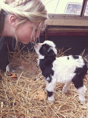 pygmy goat. i want one.  But I need a farm-  if ever I have a farm it will be a miniature critter farm-  pygmy goats, dwarf bunnies, miniature donkeys & miniature horses. .......  all things miniature & small!