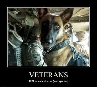 Veterans - All shapes and sizes and species -- Dogs are on the front lines in Afghanistan leading combat patrols and finding explosives with their noses and instincts.  They are outperforming advanced technology and million dollar pieces of equipment on the battlefield.  They are saving our Service Members lives every day.