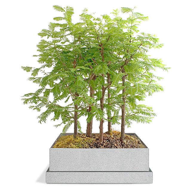17 best ideas about bonsai forest on pinterest bonsai for Unusual bonsai creations