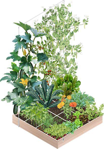 Alle info over hoe je zelf succesvol groentes kweekt, over een (makkelijke!) moestuin die je in no-time opzet, over hoe 5 minuten onderhoud per dag je veel ...