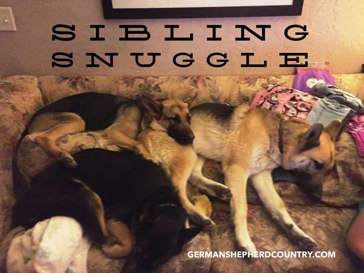 1265 best German Shepherd Dogs images on Pinterest ...