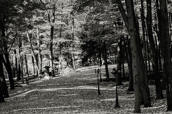 Autumn scene of Leafy Avenue in Black and White