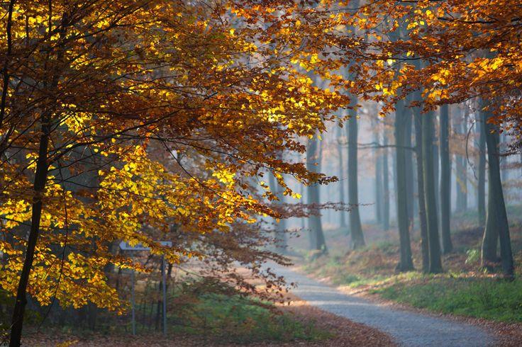 [6/15] Park Krajobrazowy Doliny Dolnej Odry obejmuje gminy Widuchowa, Gryfino, Kołbaskowo i częściowo miasto Szczecin. Na jego obszarze znajdują się torfowiska i mokradła poprzecinane siecią kanałów i starorzeczy, z florą i fauną niespotykaną już w dolinach innych wielkich rzek. Można tu spotkać ponad 200 gatunków ptaków i blisko 100 zespołów wyjątkowej roślinności. Są też liczne gady, płazy i owady (samych ważek odkryto tu 35 gatunków).
