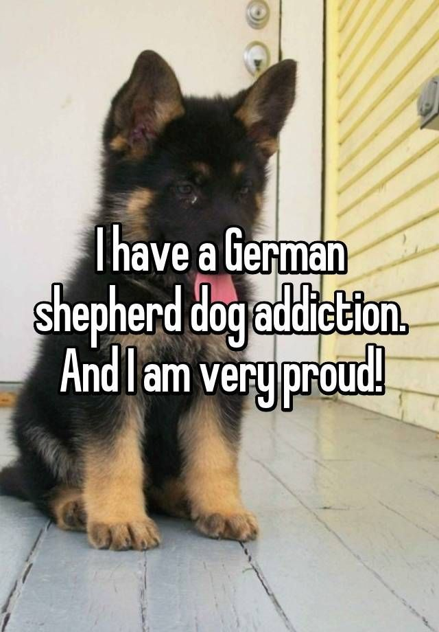 Just gotta love GSDs!