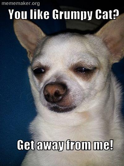 Disgruntled Chihuahua « Meme Maker – Make a Meme Online