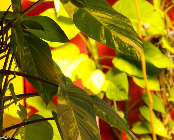 botanical punta cana