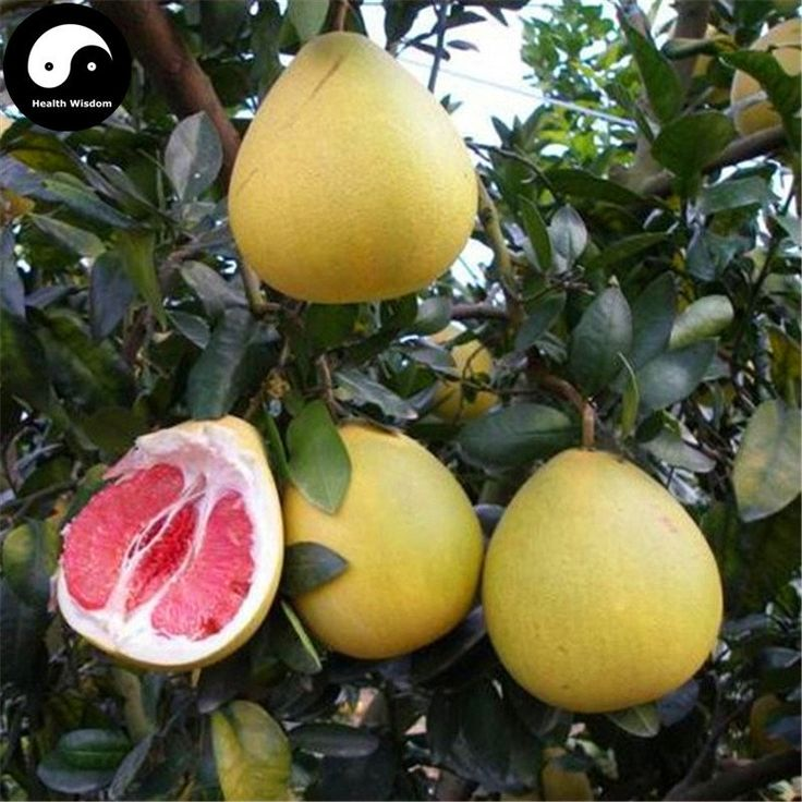 17 best ideas about grapefruit tree on pinterest orange Planting lemon seeds for smell