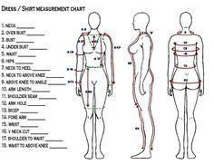 body measurements chart