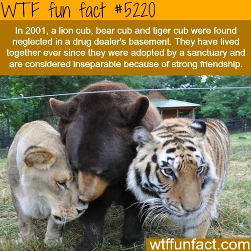 Amazing Funny: 1000+ Images About Wtf Fun Facts On Pinterest