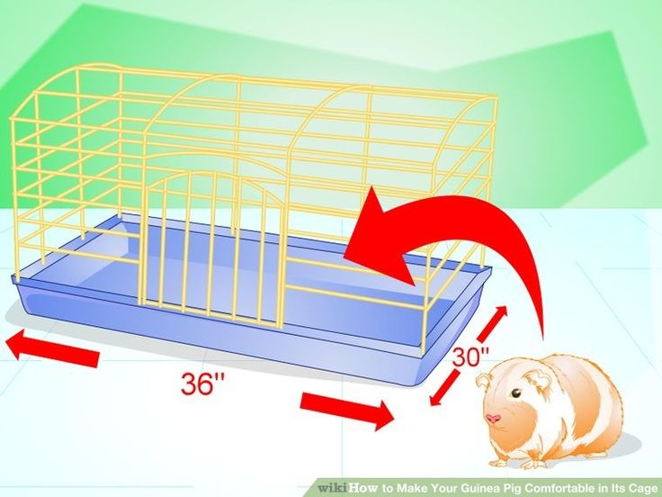 How to Make Your Guinea Pig Comfortable in Its Cage