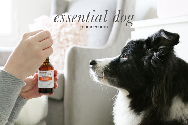 Essential Dog Grooming Skin Remedies // A complete and natural range of grooming remedies for dogs with allergies and sensitive skin // www.prettyfluffy.com