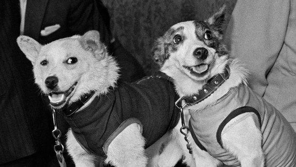 20 августа 1960 года на Землю впервые вернулись запущенные в космическое пространство живые существа -  собаки Белка и Стрелка / Astro Analytics