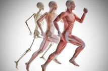 ➤ Starke Schmerzen im Gesäßbereich, die in den hinteren Oberschenkel ausstrahlen? Piriformis-Syndrom | Ursache✓ Test✓ Triggerpunkte✓ Behandlung✓ Übungen✓