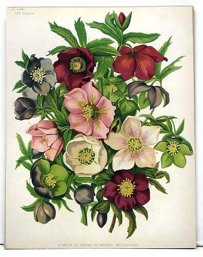 Best 25 botanical prints ideas on pinterest for Botanical tattoo london