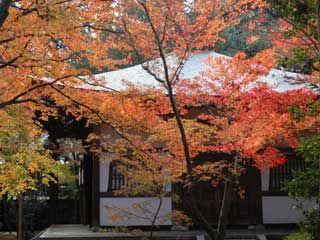 紅葉の名所:京都・滋賀の紅葉情報 2016:京都新聞