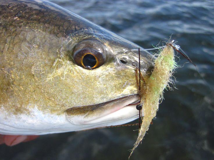 4 Flies that Changed Saltwater Fly Fishing   caseysmartt.com
