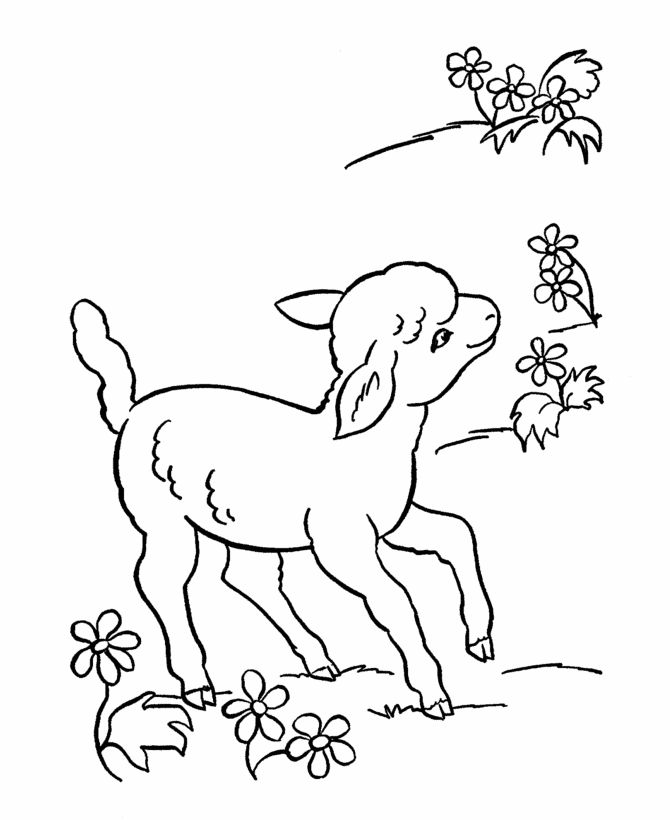 Coloring Pages Animals | Farm Animal Coloring Pages | Printable Lamb Sheep Coloring  Page And .