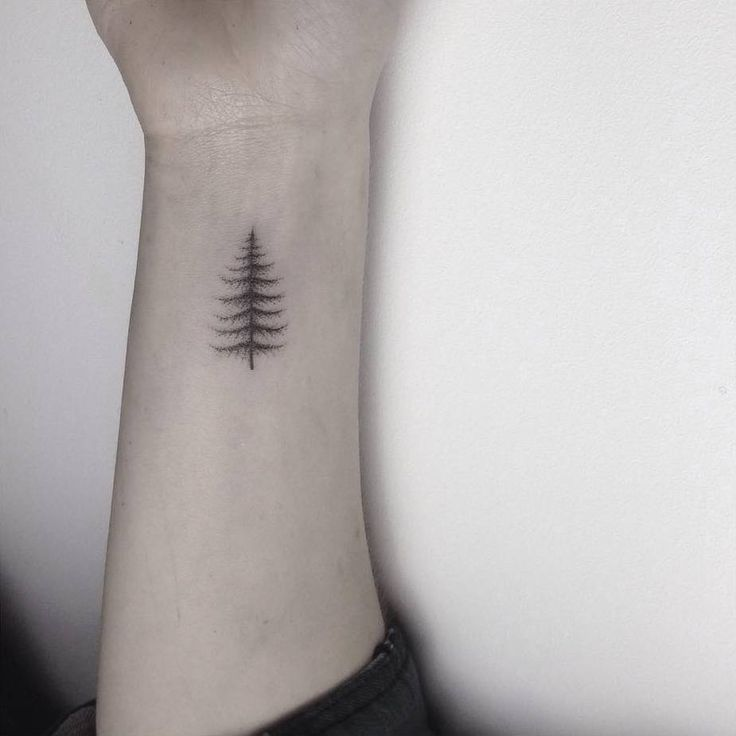 Hand poked small pine tree tattoo on the left... - Little Tattoos ...