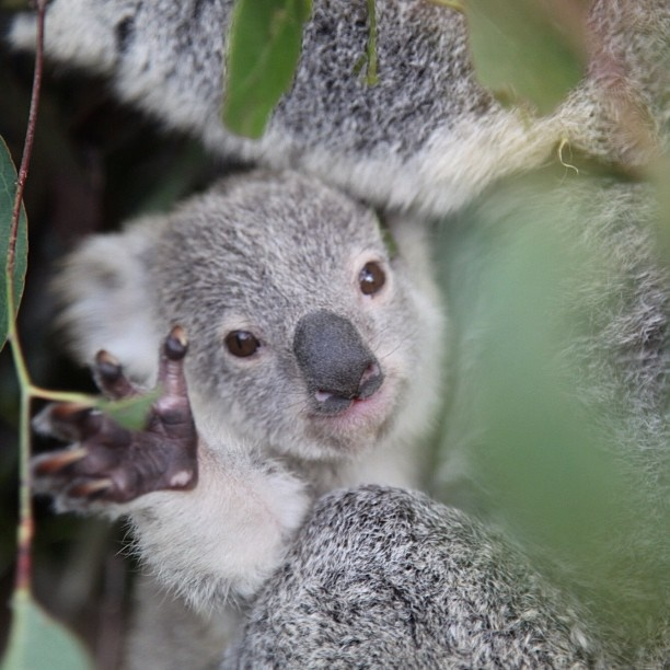 waving.............. | koalatee | Pinterest | Ps, High ...