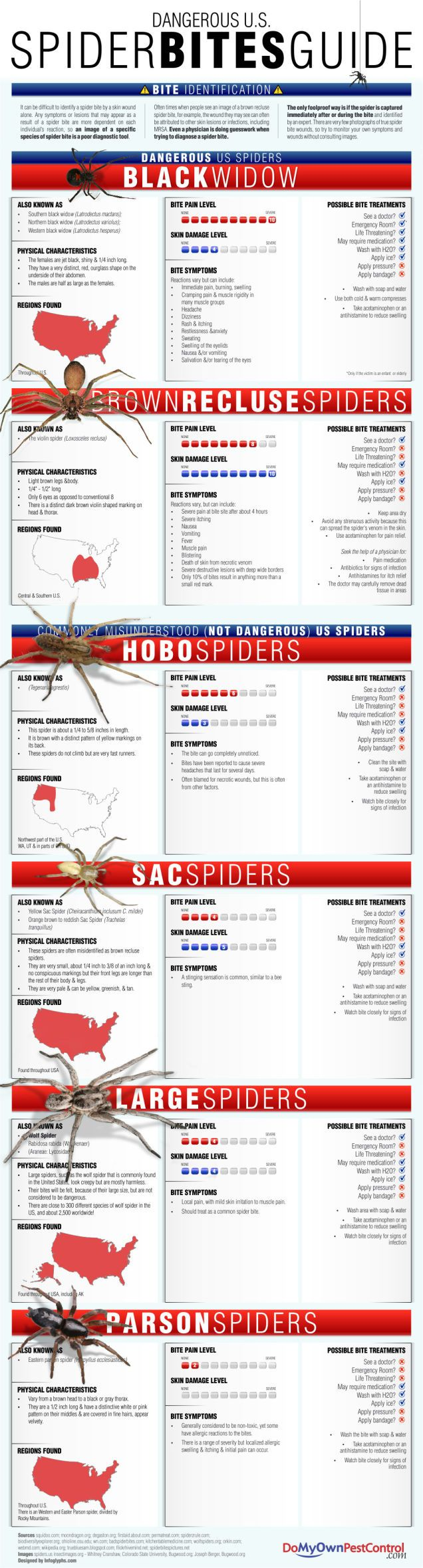 Identify Dangerous Spiders and Bite Symptoms with this Infographic