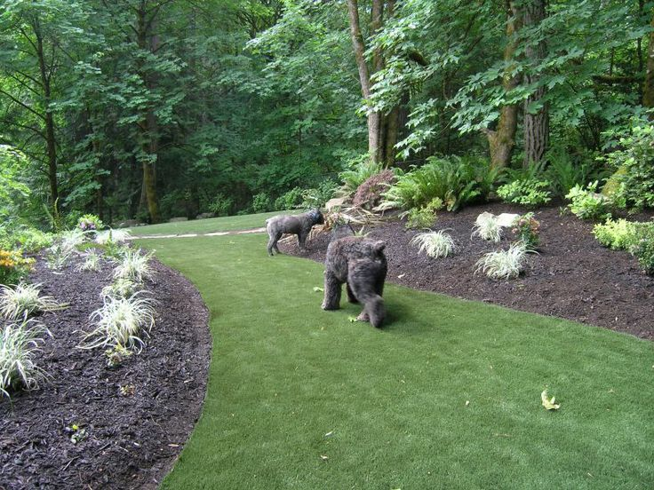 Wooded Yard Landscaping Ideas