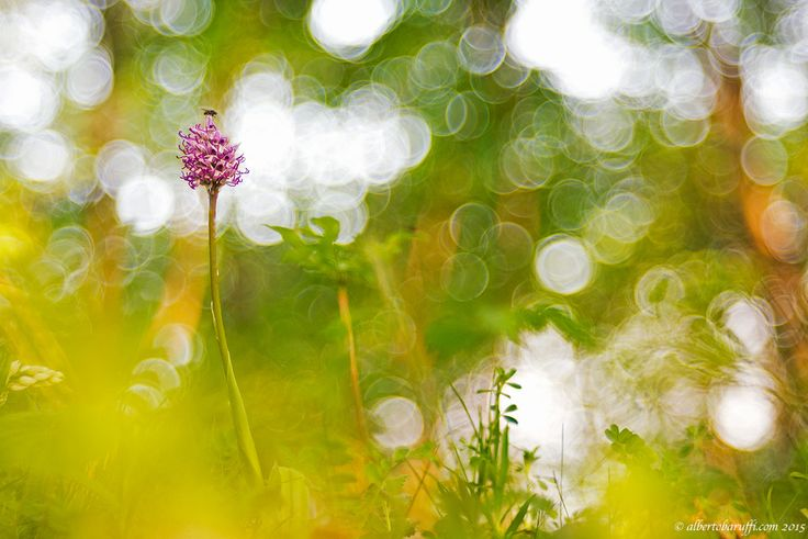 Nature by Alberto Baruffi on 500px