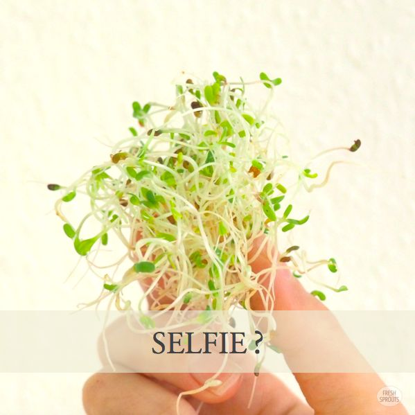 My hand with alfalfa sprouts FreshSprouts.dk