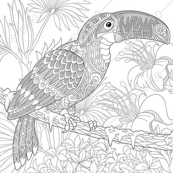 adult coloring pages toucan zentangle doodle coloring pages for adults digital illustration instant download print