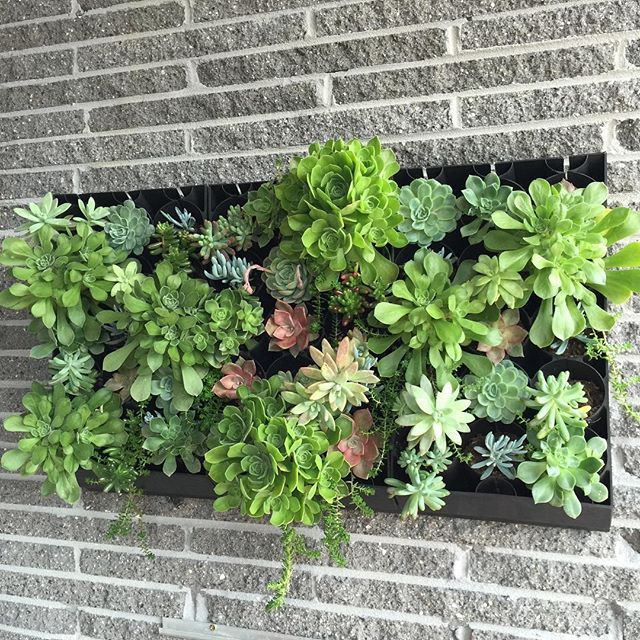 Pregrown Succulent Living Wall Planters NOW AVAILABLE Online At Luscious  Living Spaces! Our HG Living