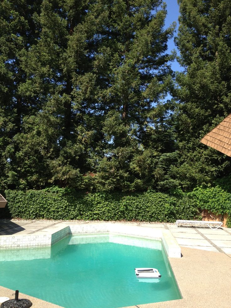 Big trees around your #pool?  No problem.  Get it under control with a #solar powered #robot.