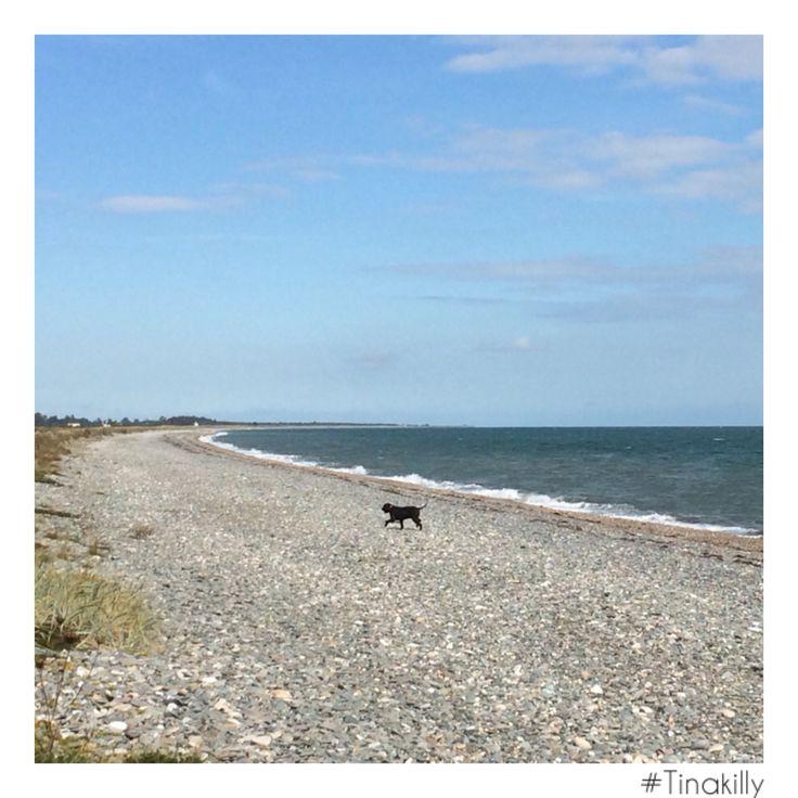 Paws and admire! @tinakilly_country_house_hotel #Tinakilly #IrishSea #GardenOfIreland #BeachWalks #WicklowBeach