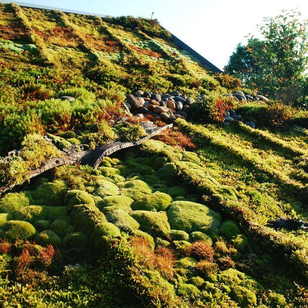 Как не странно многие считают, что зеленые крыши это всё таки утопия. Их дорого строить, сложно за ними ухаживать. Тем не менее зеленые крыши строят те, кому они нужны.