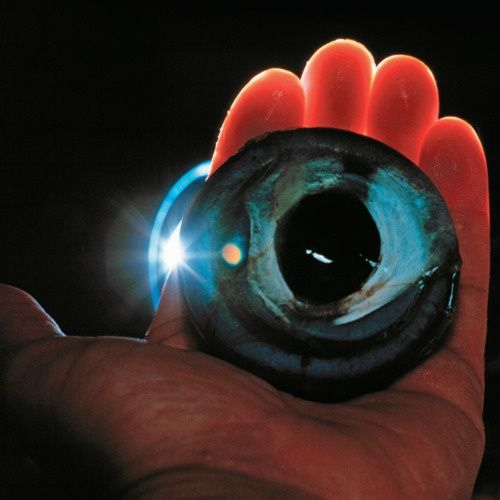 Colossal Squid Eye... I watched a documentary on the colossal squid. AMAZING!!!