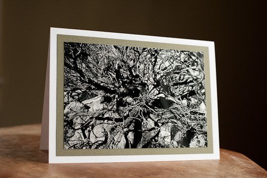 Fine Art  Card  5 x 7 Desert tree black and white part of the desert collection $5.00