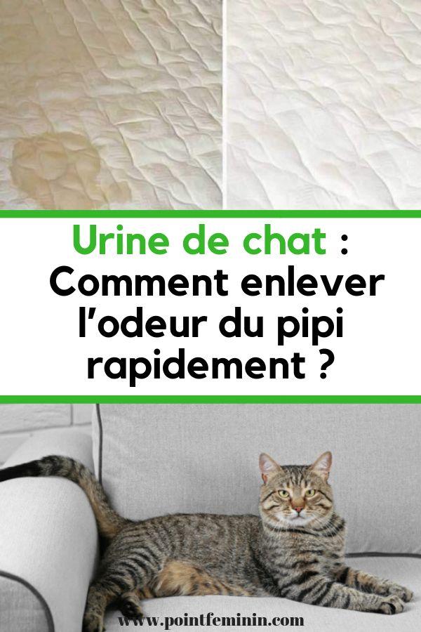 Urine de chat : Remark enlever l'odeur du pipi rapidement