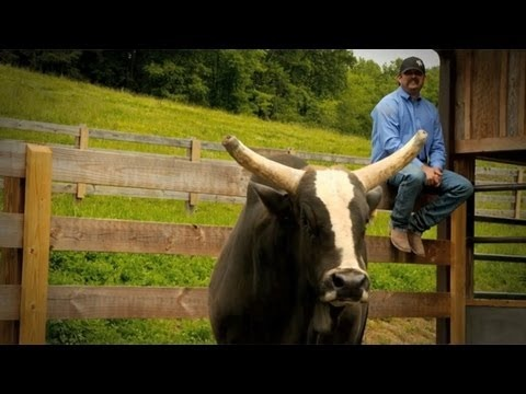 how to become a stock contractor with the pbr