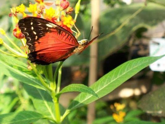 Austria -- Schmetterlinghaus: The Imperial Butterfly Park | Atlas Obscura