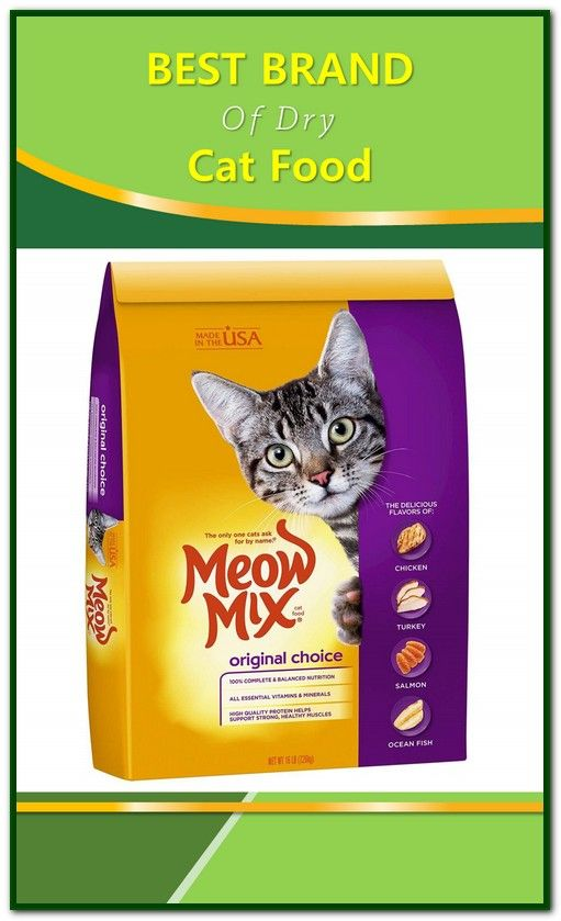 The best dry cat foods are rich in protein and low in