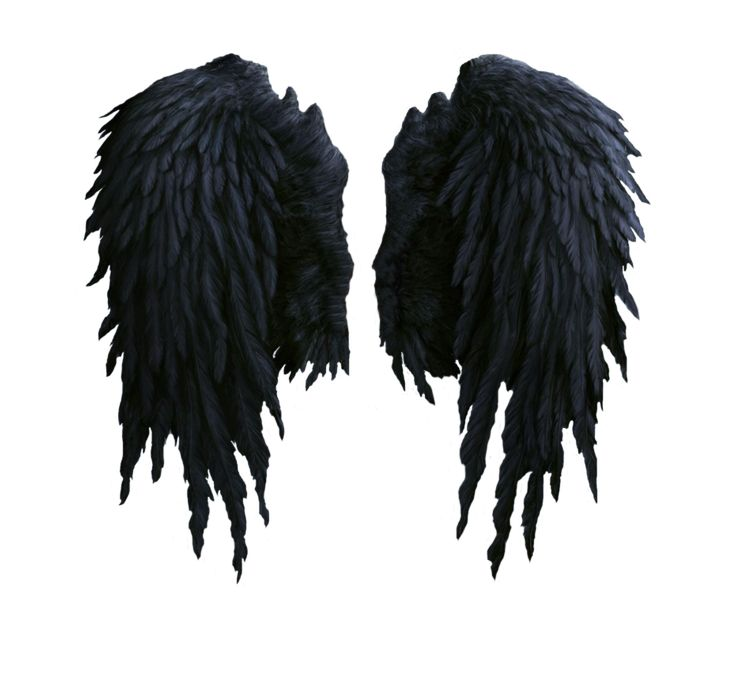 black angel wings stock PNG by Shadow-of-Nemo on deviantART