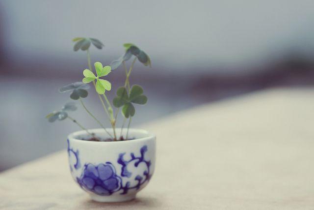 teeny tiny clover