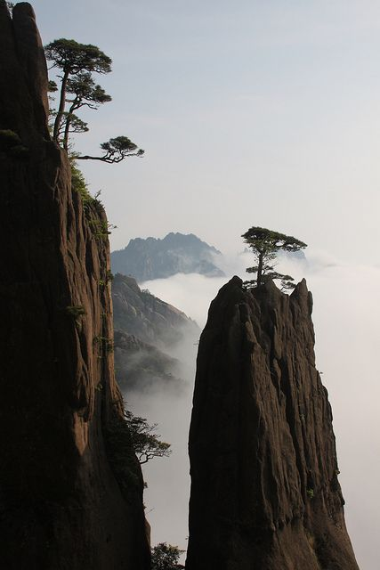 Pine tree growing on a rock, Huang Shan, China