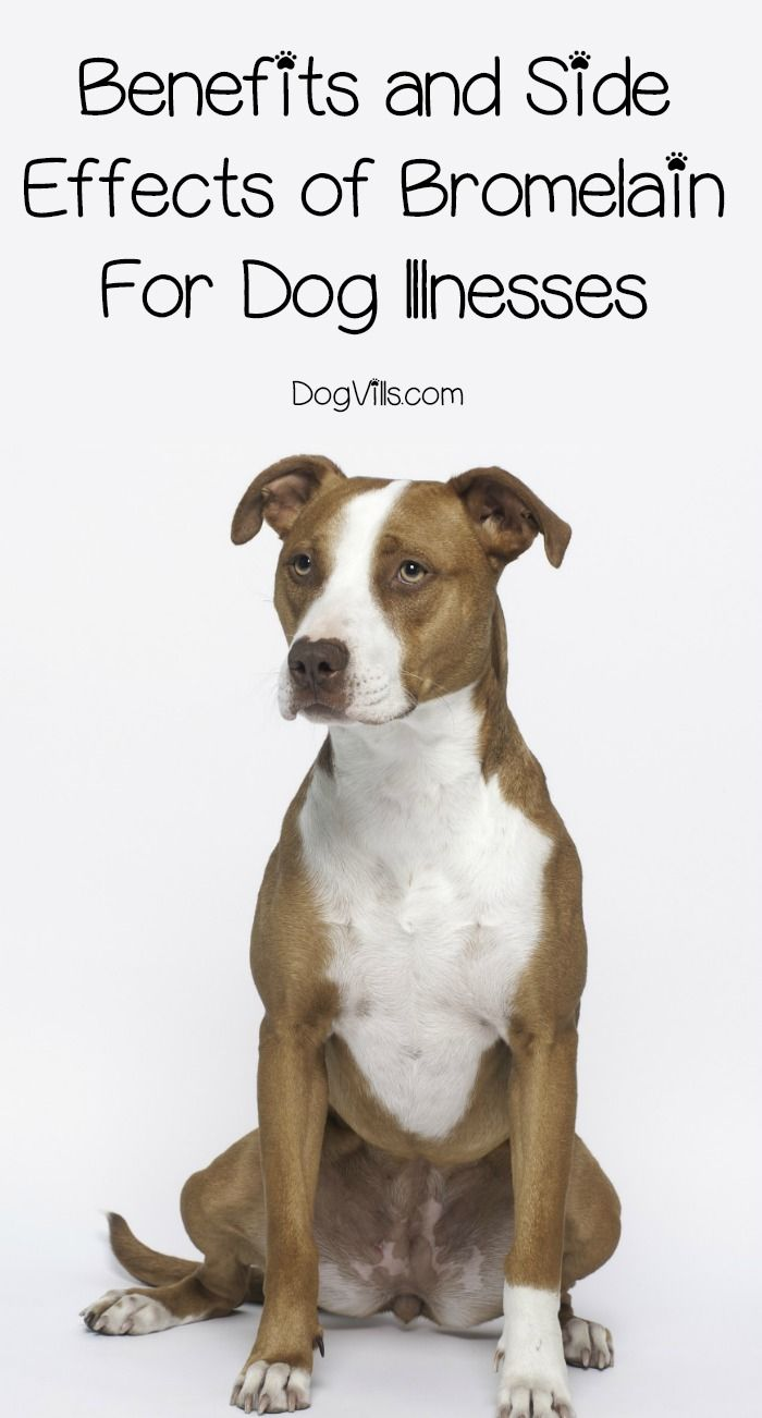 Bromelain Use In Dogs The Benefits And The Risks Dogs