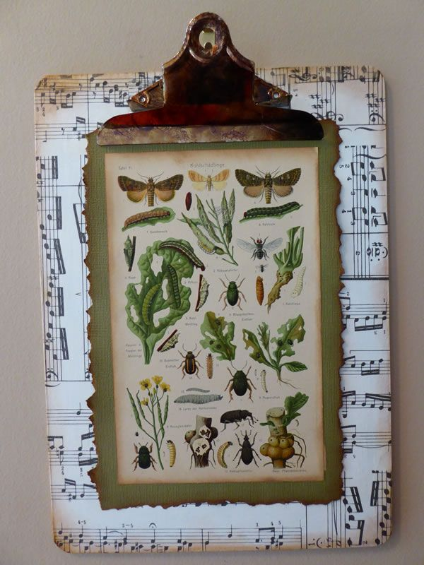 These botanical illustrations from a 1921 German agricultural textbook make a lovely pieces of decorative art. A little white paint, tissue paper, and distress ink pulls the pieces together and gives the clipboard an aged vintage feel to match the beautiful illustrations. A photocopy of the German book's inside front cover has been added to the back of the clipboard to explain the history of the piece. www.brushandbolt.com