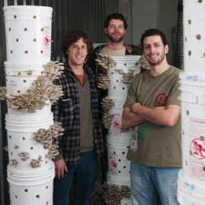 Bubriski, Fortini, and Tobias of Portland Mushroom Company grow their oyster mushrooms in reusable plastic buckets instead of disposable plastic bags, and use a reclaimed shipping container as a climate- and humidity-controlled grow room.