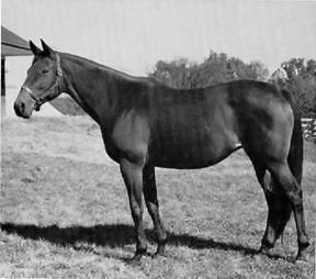 Baby League was the 3rd foal of the French-bred La Troienne, the Teddy daughter who founded a dynasty.  Her sire, Bubbling Over, the 1926 Ky Derby winner also owned by Col. Bradley of Idle Hour Farm, was a grandson of the amazing Sweep.  She foaled both Striking, by Nasrullah, grand-dam of Poker, and Busher, by War Admiral, grand-dam to Fair Charmer.  Fair Charmer was bred to Poker and gave us My Charmer, Seattle Slew's dam!