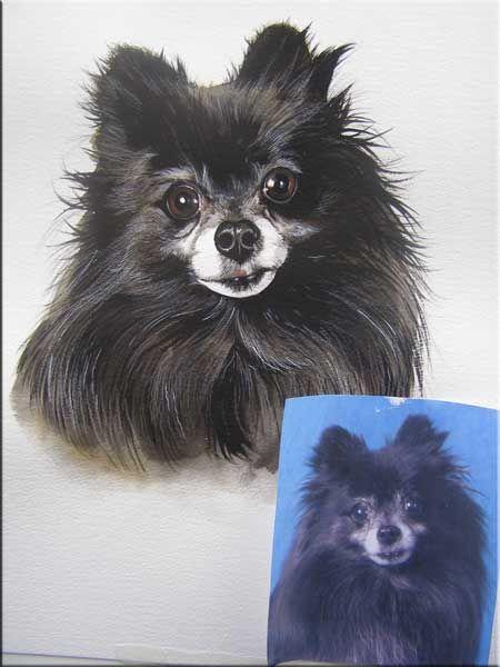 Image Detail For Pet Portraits Dog Portraits Boxer Pomeranian Golden Retriever Dog