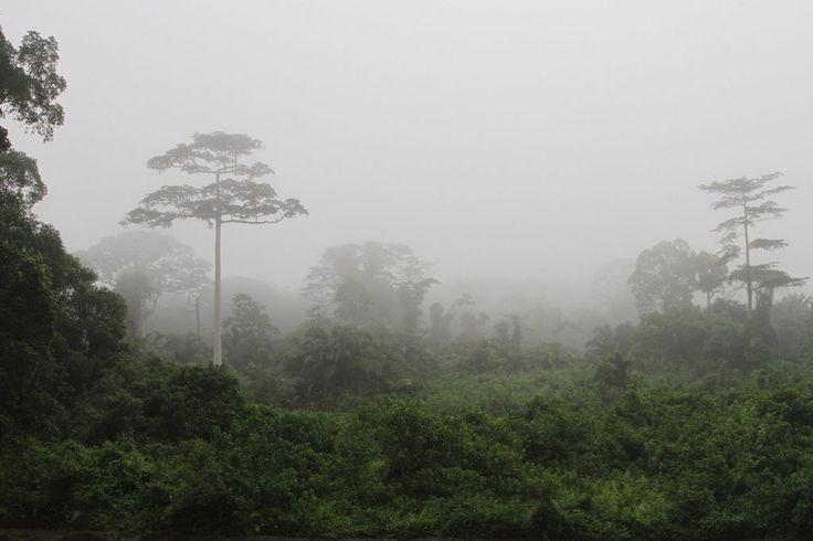 Taï National Park, Ivory Coast