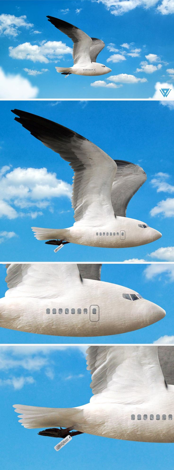 birdplane_wellgraphic