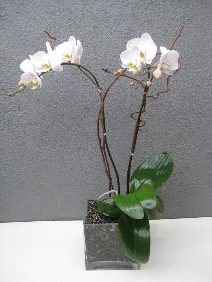 how to make orchids last