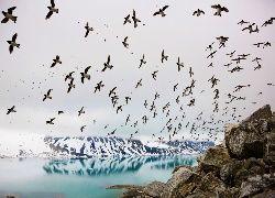 Ptaki, Skały, Rzeka